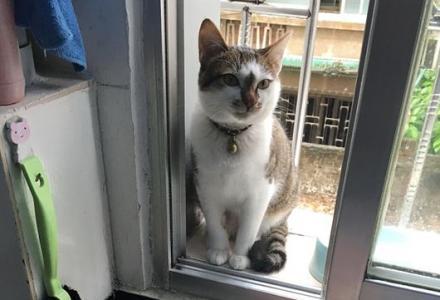 桂林北门开心猫舍猫咪托管寄养服务 只限猫咪长期有效 全年无休