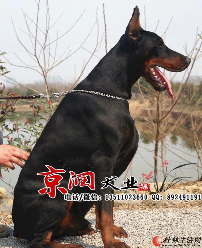 北京有养宠物狗的吗 北京哪里有卖狗的