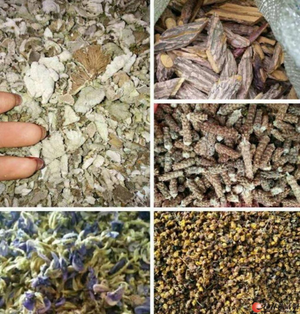 梧州功能凉茶(批零均可)