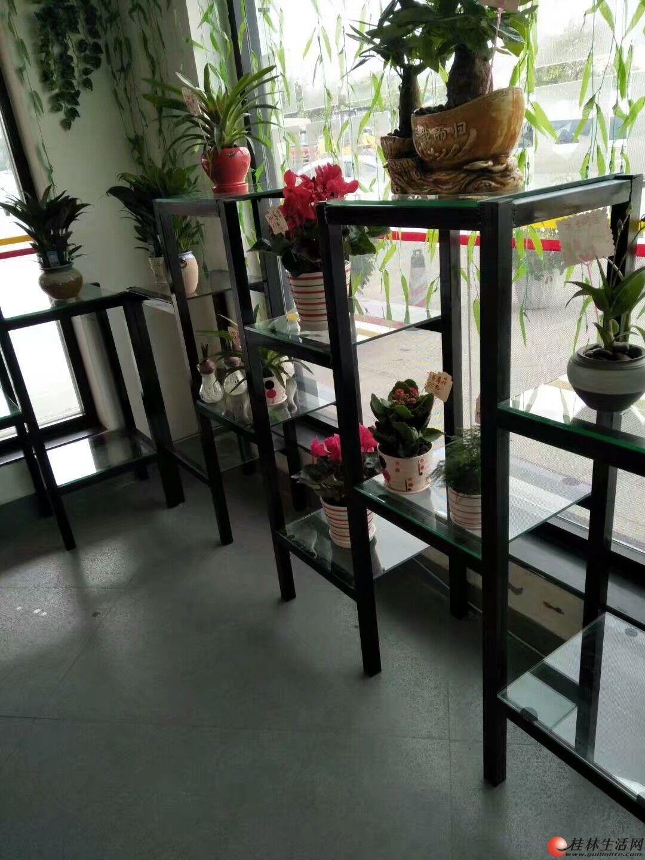 鸿绚花卉各种室内外盆栽