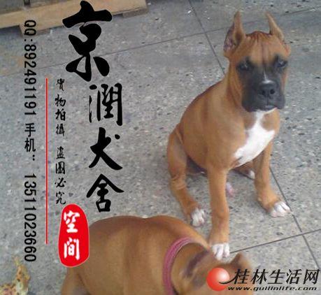 万博体育客户端有卖拳师小狗的吗 拳师的价格