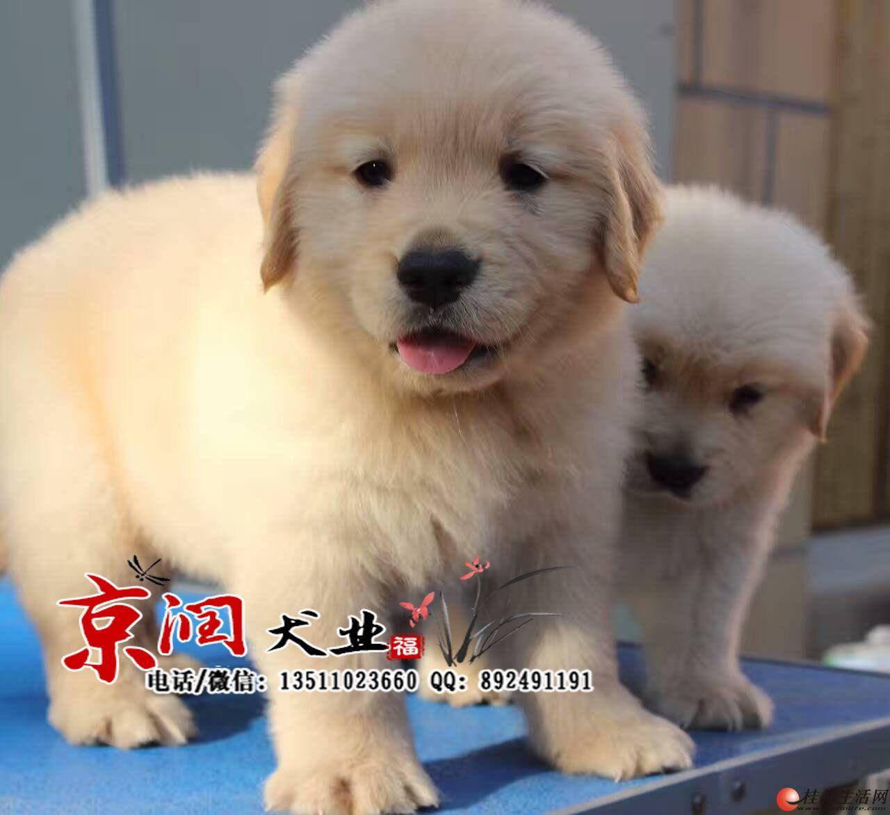 北京最大的养狗场 北京卖狗的