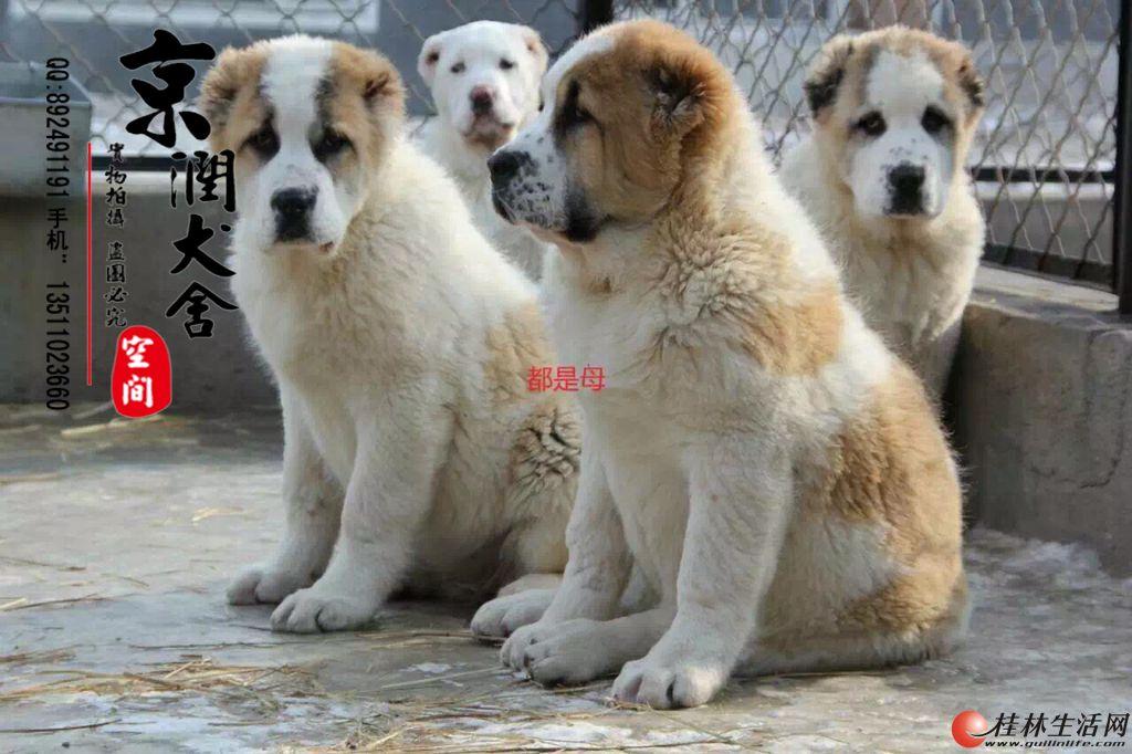 哪里有养狗的北京养狗场