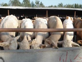 山西省龙城牧业养殖场