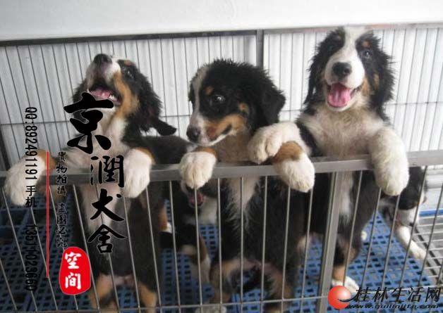 北京哪家狗场信誉高