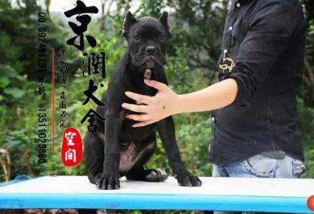 桂林最好的狗场在哪里