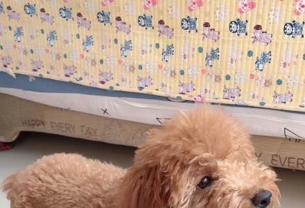 泰迪犬一只,5个月大,因为本人去外地工作不能继续养下去希望爱狗人士能继续抚养