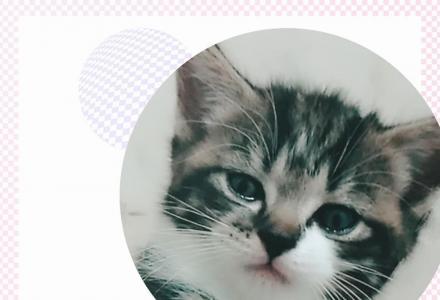 两个月大,家养,短毛猫,个人