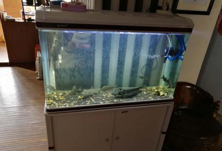 出售一个1米长玻璃鱼缸带柜子