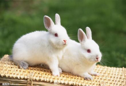 大兔子自己繁育的大兔子出售90元/只;小兔子40