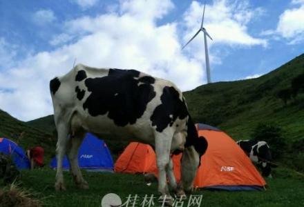 大量9成新帐篷睡袋背包出租,特惠25元/晚
