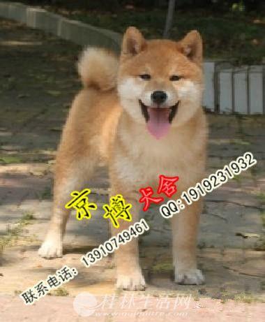 日系柴犬幼犬多少钱 纯种柴犬幼犬哪里有卖的