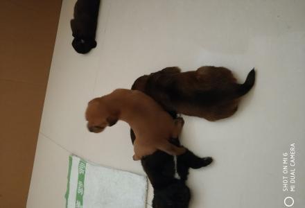 2个月的狗宝找新主人