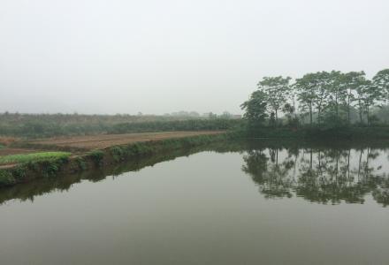 自家泉水10亩鱼塘及周边菜地出租