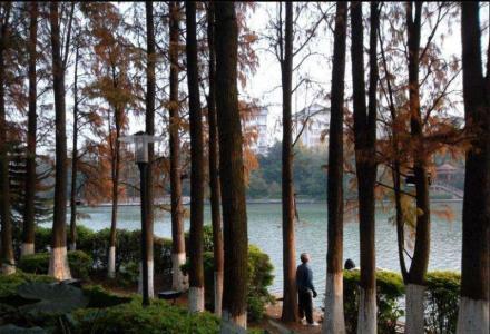 桂湖旁乐群学区精品三楼两房出售