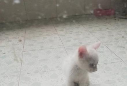 可爱的小猫咪寻找可爱的你哦