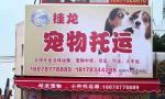 桂龙宠物托运,为宠物选择安全放心的方式到达目的地