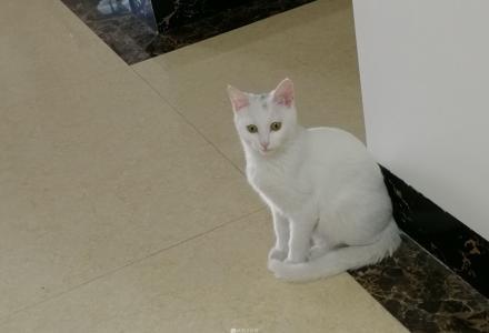 可爱的小白猫猫求收养啦~