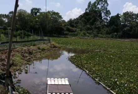 桂林市优质鱼塘(虾塘)转租