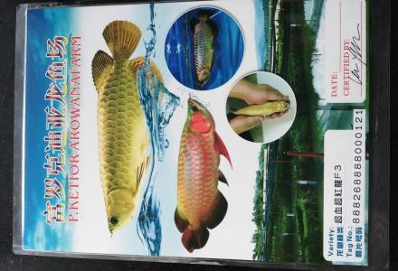 急售1.5米可爱水族馆鱼缸及龙鱼