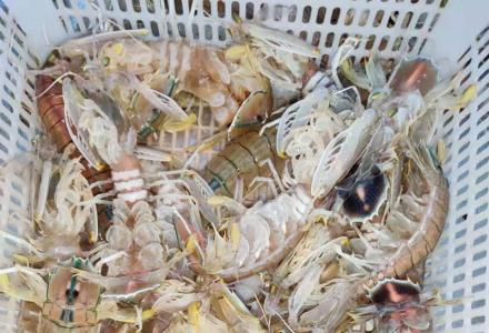 广西北海海鲜批发 生猛海鲜 冰鲜 欢迎大小批发商合作共赢