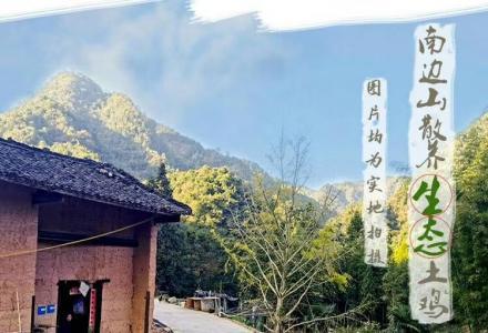 六塘镇南边山生态散养土鸡