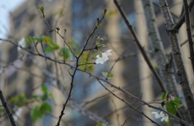 繁花麓放|不负阳光倚作伴,春来看房正当时