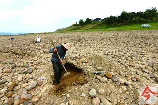 """3月3日,象州运江古镇河滩上,几名村民挖出小坑""""寻宝""""。"""