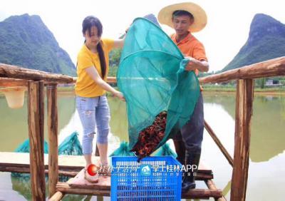 李凤鸣在引进的大闸蟹、小龙虾养殖基地和工人一起收网。(资料图)