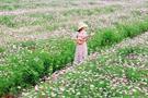 桂林全州竟然还有这样一个好地方!赏格桑花采蓝莓享初夏好时光(图)