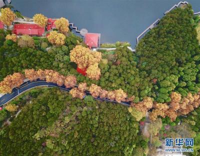 这是如琴湖旁公路的秋色风光(10月20日无人机拍摄)。当日,位于江西省九江市庐山风景区内的如琴湖云雾缭绕,层林尽染,吸引众多游客前来观赏游玩。 新华社记者 胡晨欢 摄