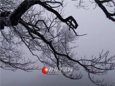 猫儿山雾凇美景
