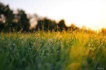 春分,调和阴阳身体安