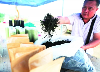 桑果园里的工作人员展示用桑叶制作的桑叶茶。