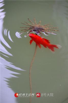鱼戏莲叶间
