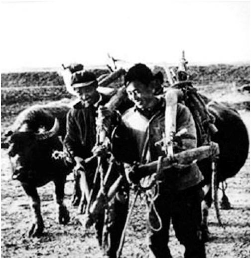 包产到户后,农民的积极性大大提高(资料图片).png
