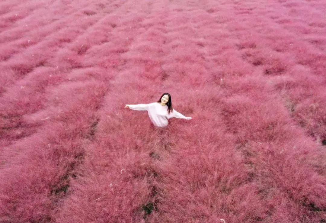 这片网红花海已盛开,约吗
