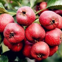这些水果在冬天吃真的是太健康了!