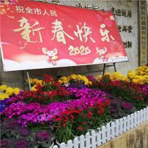 市中西医结合医院积极营造温馨祥和的春节氛围