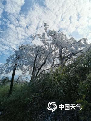中国天气网广西站讯 受冷空气影响,恭城瑶族自治县高寒山区气温骤降至零度以下。2月16日上午,恭城燕子山顶出现雾凇,放眼望去一片白茫茫,处处银装素裹,宛如仙境。(图文/易达仁)