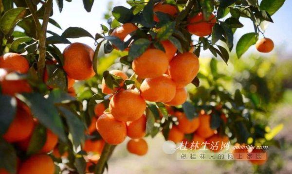 【顺祥集团】爱心助农!万斤鲜果送健康!