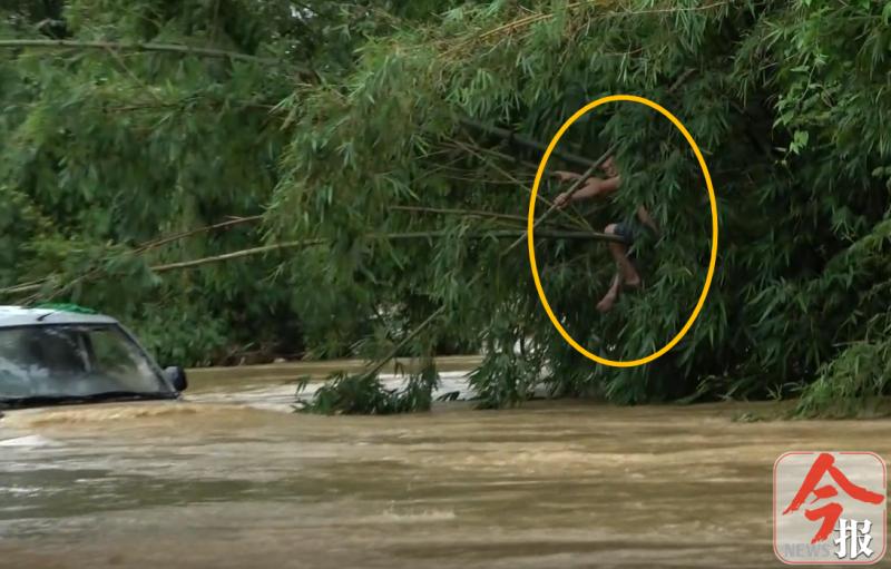卡车过洪水熄火 男子爬竹子上躲避