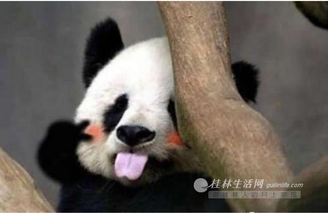你有一张来自熊猫乐园的的邀请函,请查收!