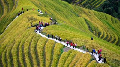 10月17日,游客在广西乐虎国际娱乐手机版市龙胜各族自治县龙脊梯田景区观光游览。
