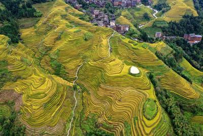 10月17日,游客在广西桂林市龙胜各族自治县龙脊梯田景区观光游览。