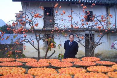 2006年恭城莲花红岩村老屋前的柿子.如今这柿子就像金元宝那样,一树树(果子)一盘盘(柿子)换回了一张张(票子)一栋栋(房子)。