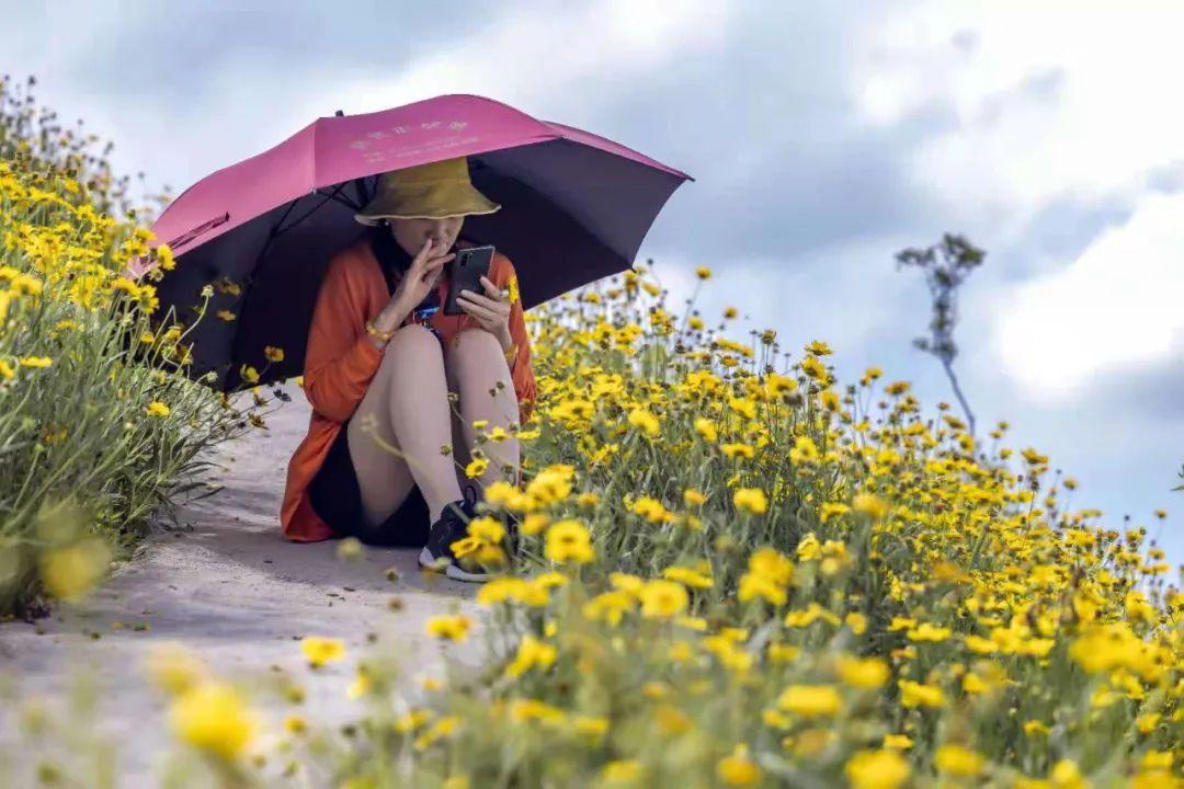 興安源江上的小黃花盛開啦