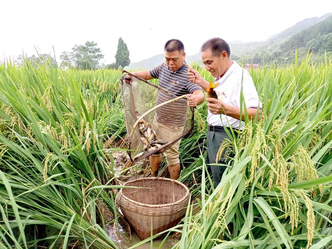 桂林唯一!这获评国家优质粮食工程项目县