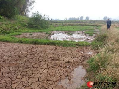 乐加村的一片农田灌满了黄泥。记者周绍瑜