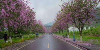 桂林这所学校美得像童话